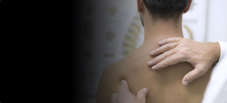 Плечевой сустав и ключица