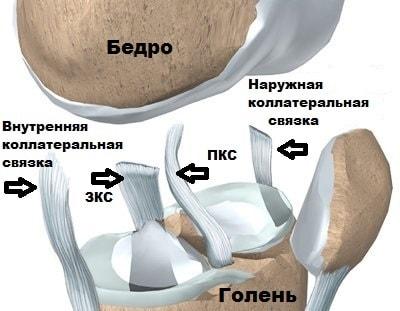 Боковая медиальная связка левого коленного сустава