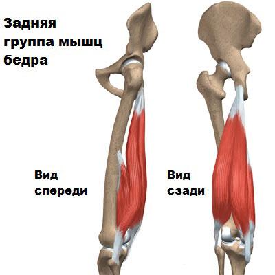 Передние связки коленного сустава